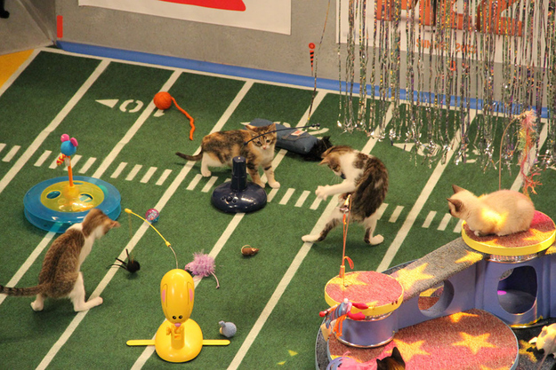 Kittens overwhelmed with the number of toys on the field.