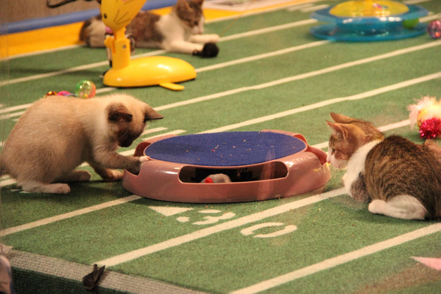 Actually, everything about the kitty halftime show.