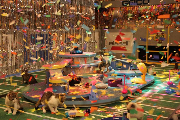 When confetti came pouring down on the kittens.