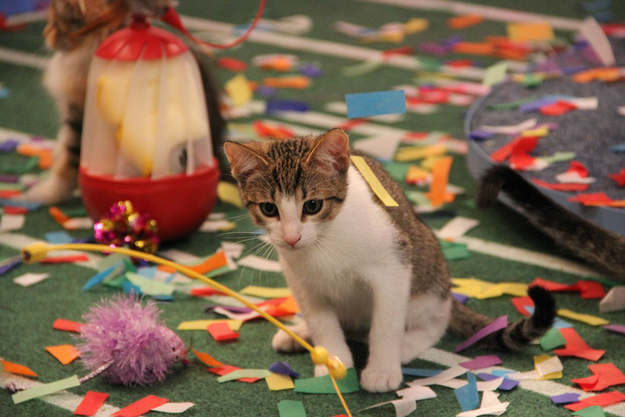 Then the kittens were fully confetti'd.