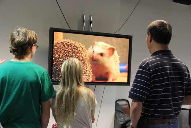 The families of hedgehogs watching their 'hogs on the monitors backstage.