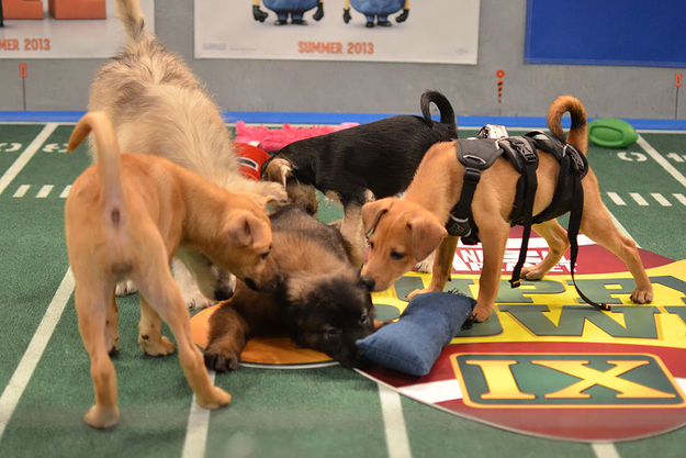 Puppies attacking puppies.