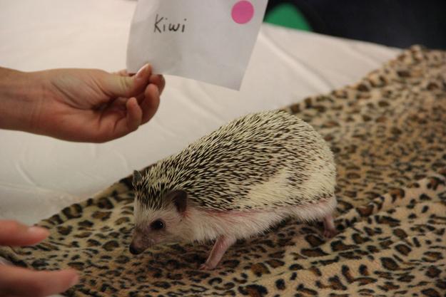 Such as Kiwi: