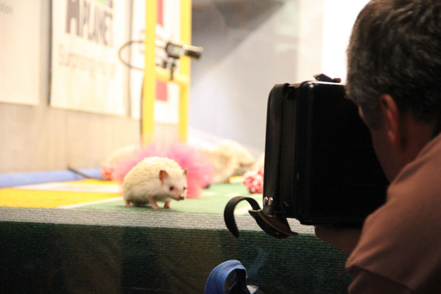 Hedgehogs who are ready for their close-up.