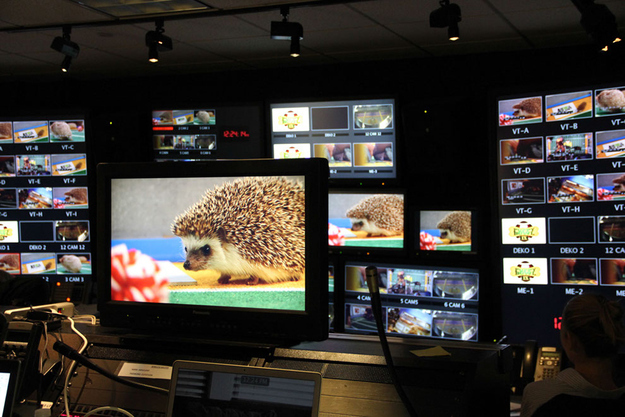 THE HEDGEHOG CONTROL ROOM.