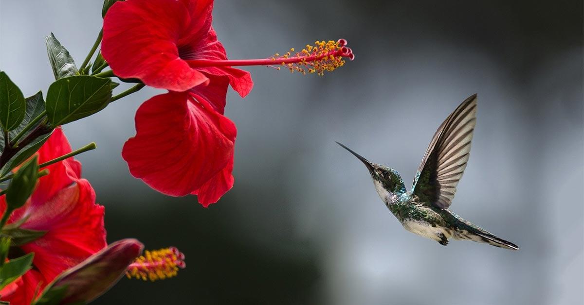 hummingbird getting nectar from flower