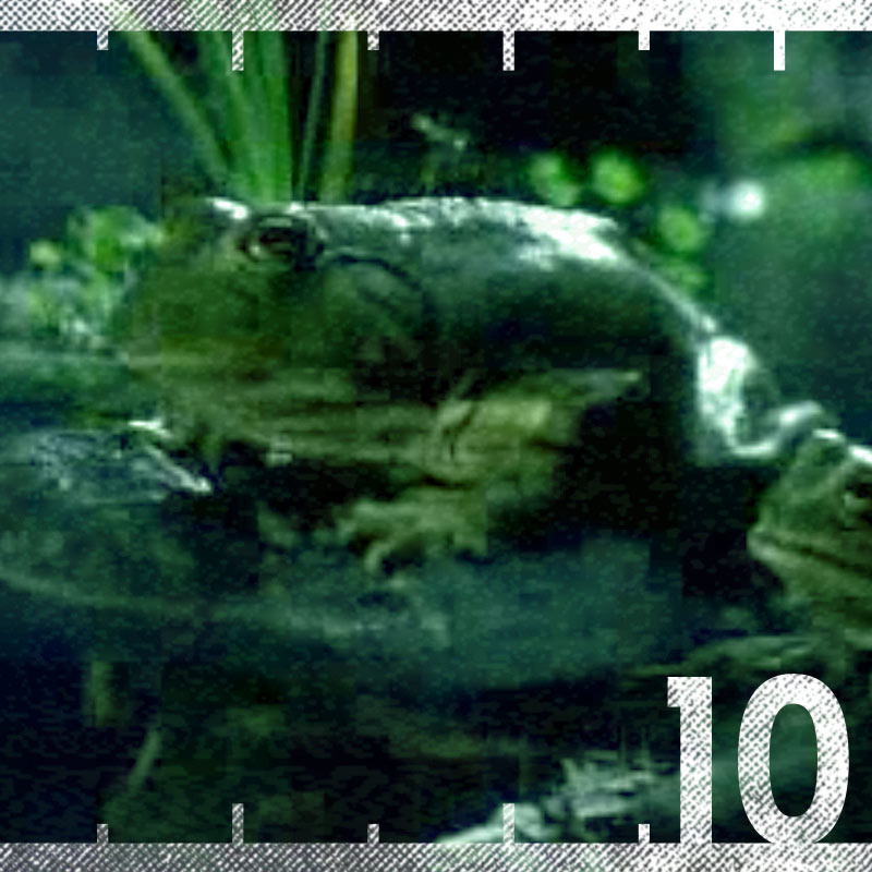 Budweiser 1985 Frogs Super Bowl Commercial