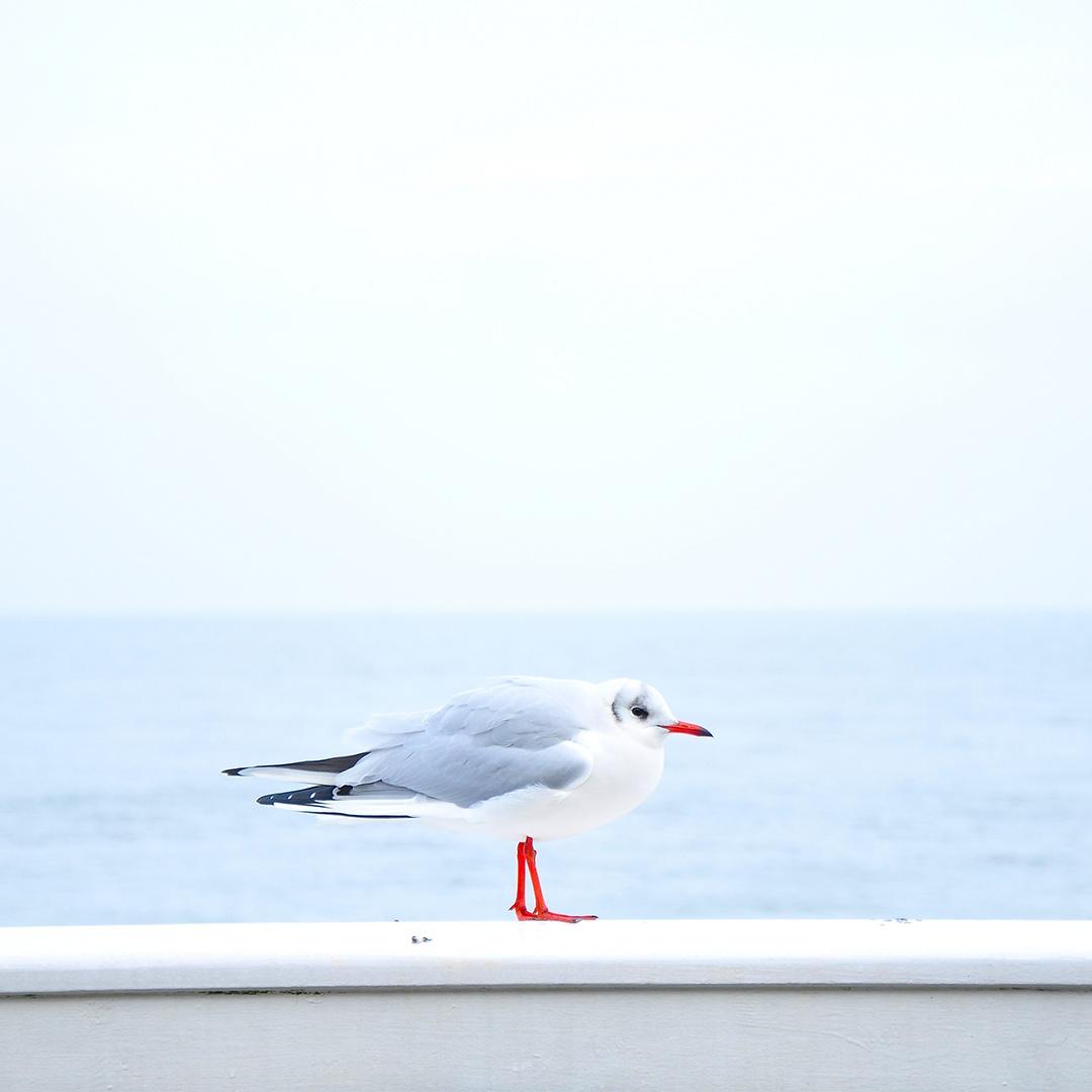 sea-bird-ocean-animal_copy.jpg