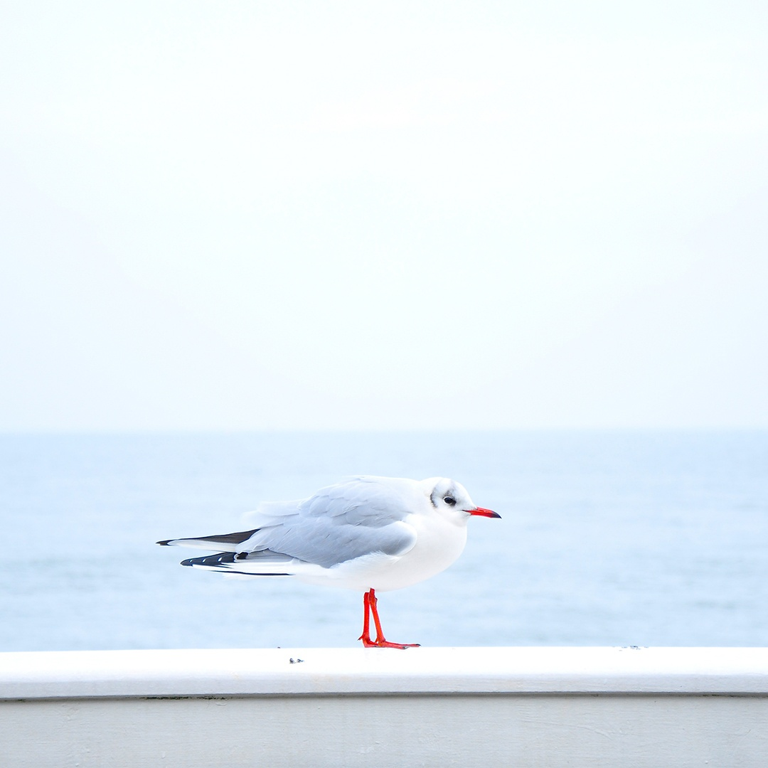 sea-bird-ocean-animal_copy.jpg