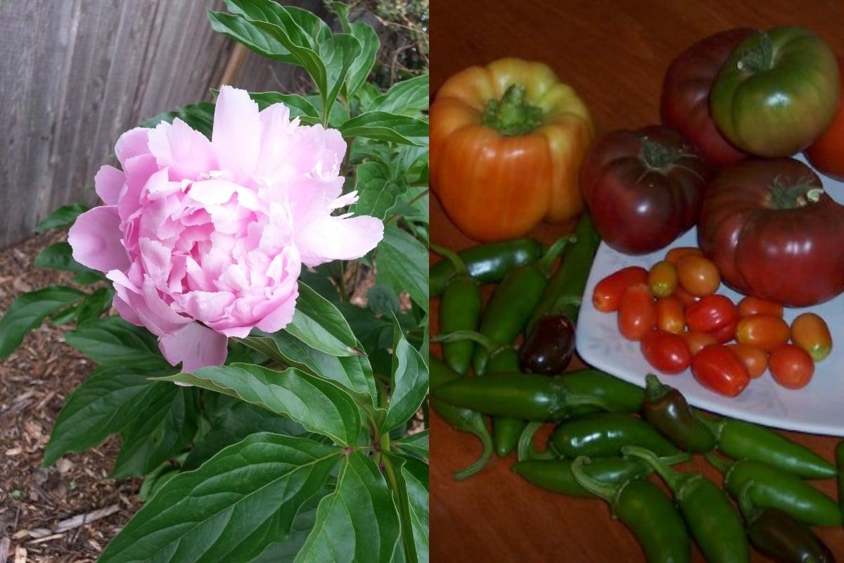 flower and garden vegetables