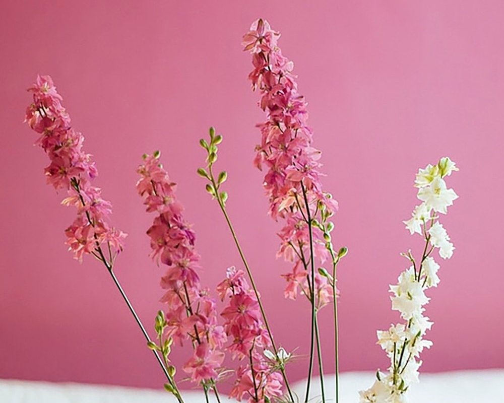 flowers-pink-large_copy-915700-edited.jpg