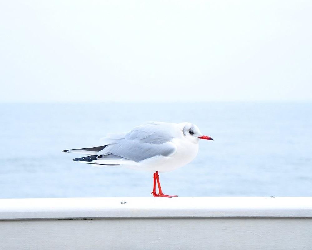 sea-bird-ocean-animal_copy-256193-edited.jpg